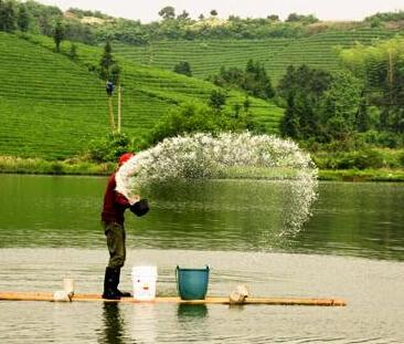 10亩鱼塘排水设计图